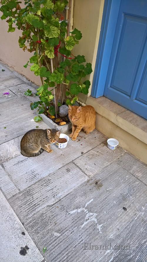 Кошки в старом городе