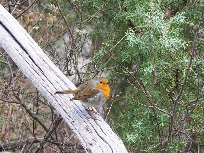 Птичка в ущелье