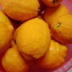 Бергамот: растение или фрукт? Что приготовить из бергамота