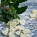 Греческая мастика: сокровище острова Хиос