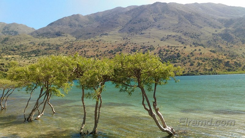 Деревья у берега озера Курнас