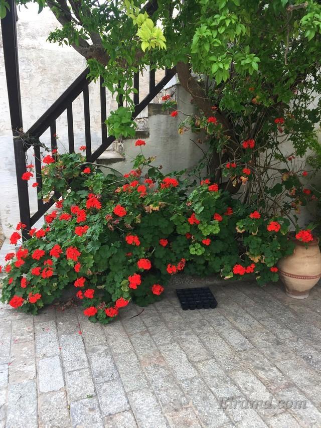 Лестница в цветах или цветы у лестницы