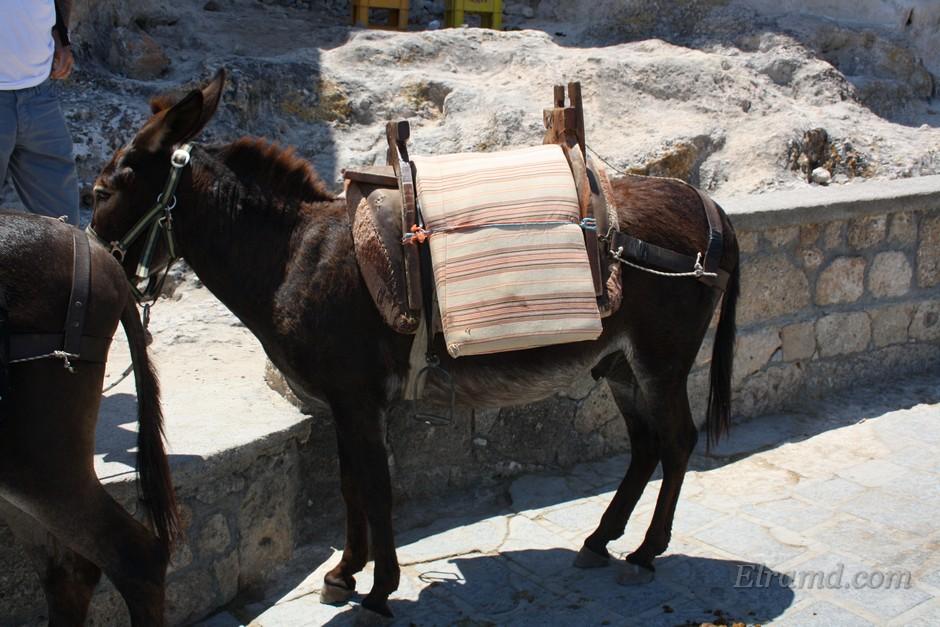 Знаменитые ослики Родоса