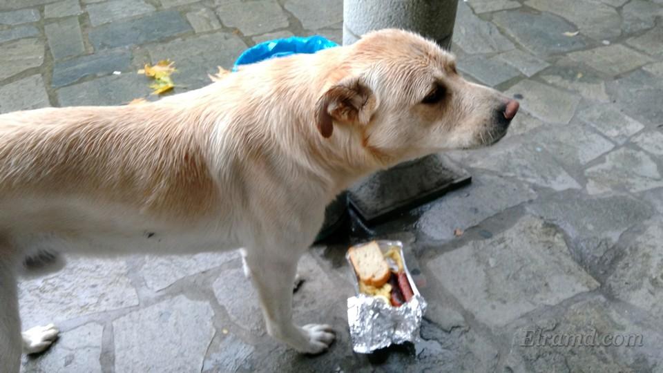 Этому псу мы отдали остатки обеда