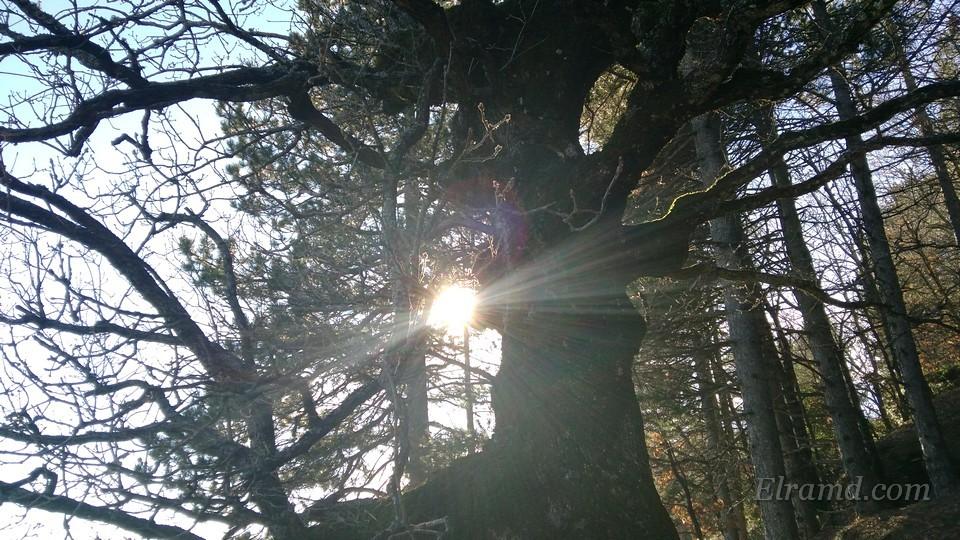 Утренний лес Холомонда