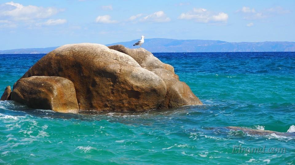 Чайка на скалах в бухте Фава