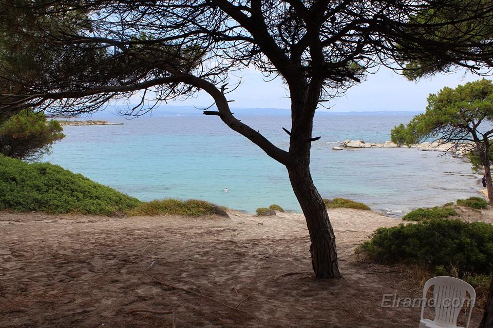 Дерево на пляже Кариди