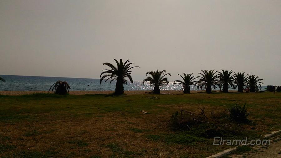 Ряд пальм вдоль пляжа