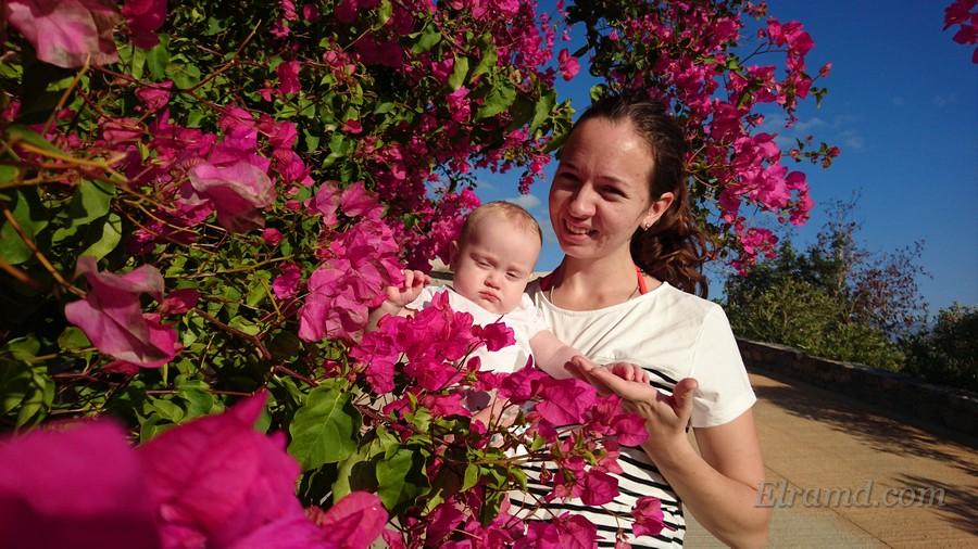 Октябрьские цветы на Крите
