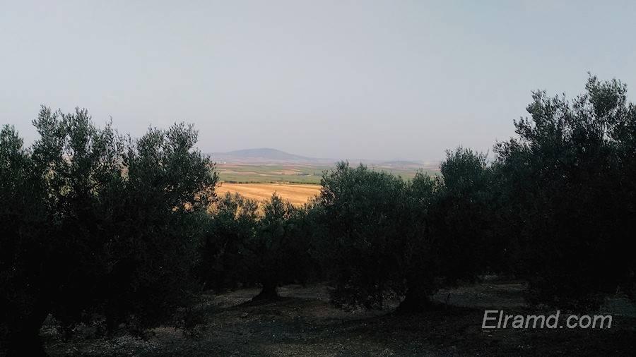 Виды полей Халкидики