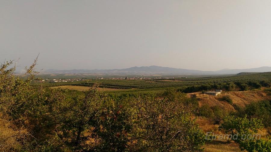 Абрикосовые поля