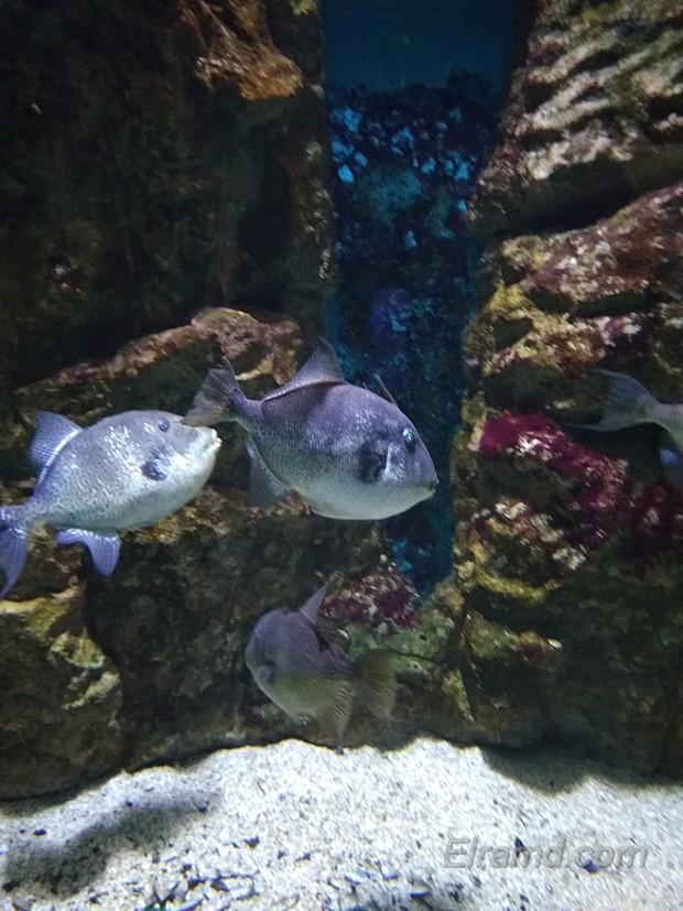 Рыбки в Аквариуме Ираклиона
