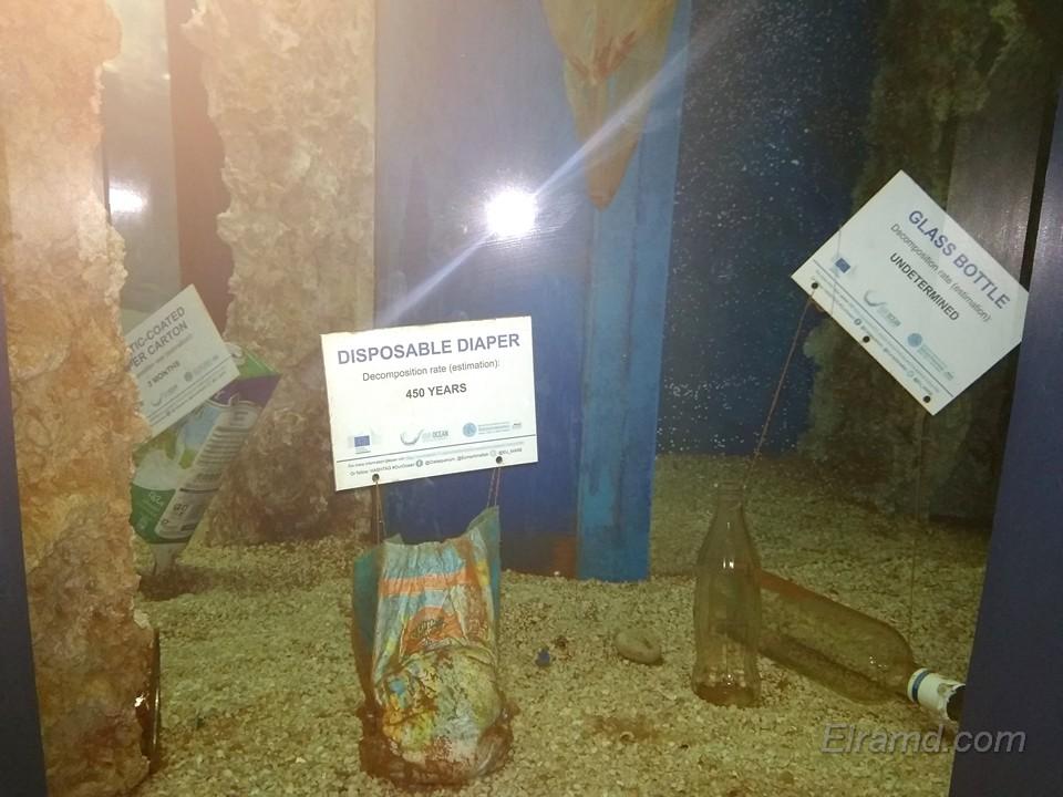 Экспонаты музея Аквариума