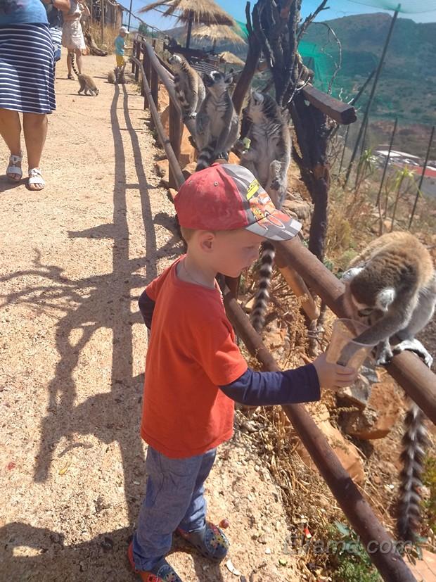 Кормление лемуров в Зоопарке