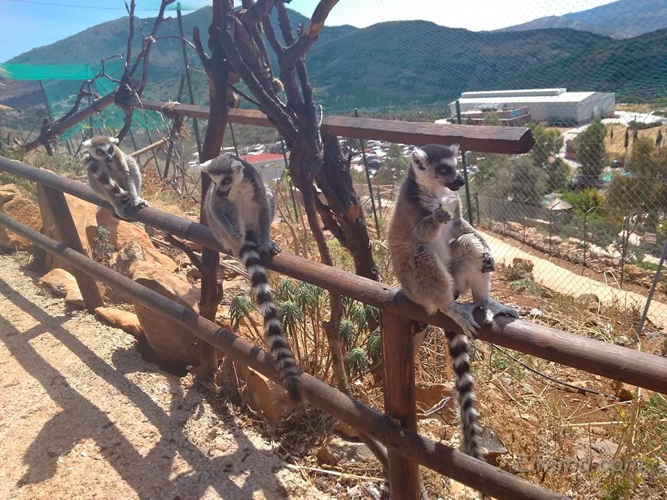 Лемуры в Зоопарке Неаполи