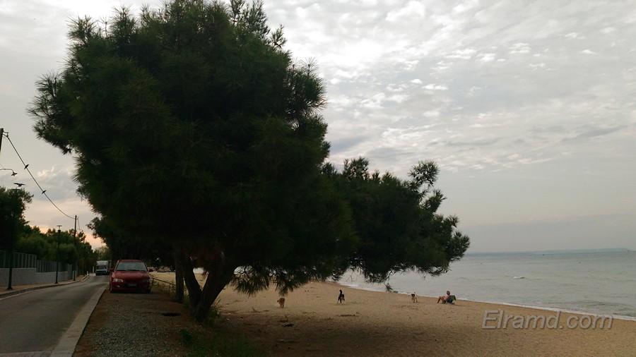 Пляж под соснами в Неа Муданья