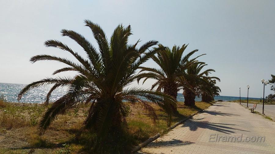 Пальмы на набережной Неа Плагия