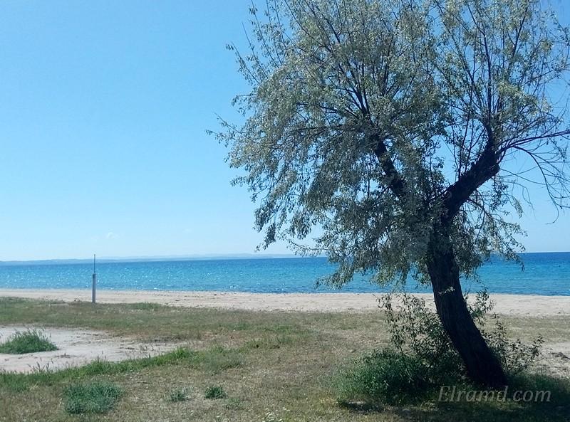 Цветущее дерево на пляже
