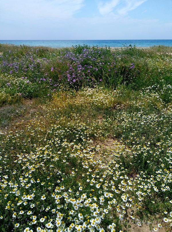 Цветы вдоль пляжа