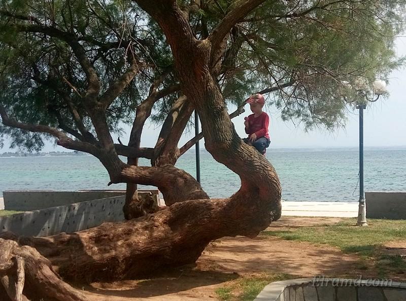 Дерево на набережной Неа Муданья