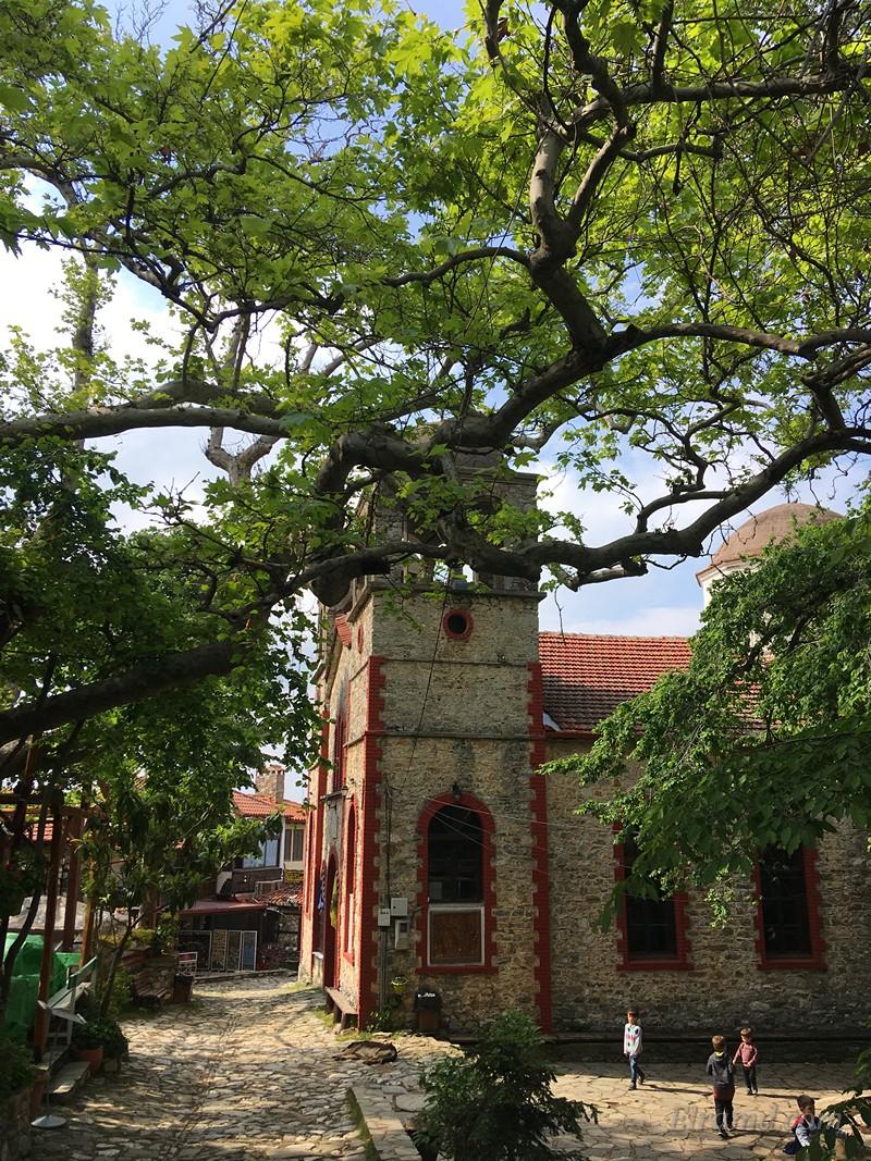 Храм в окружении огромных деревьев