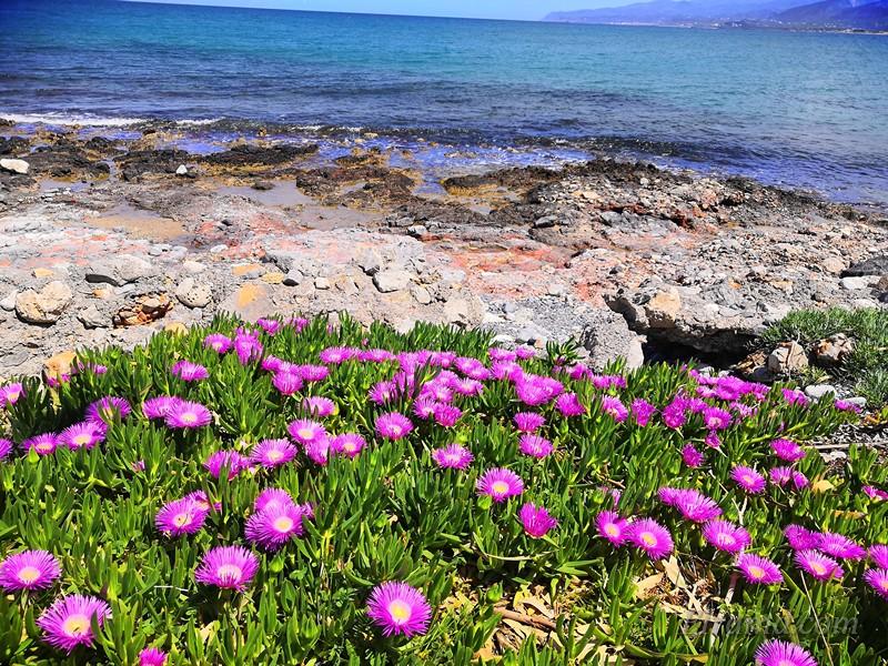 Цветы прямо у моря