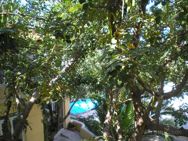 Вид с нашего балкона в Бали