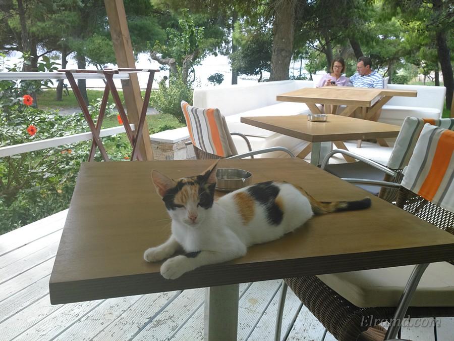 Местная котейка на столе