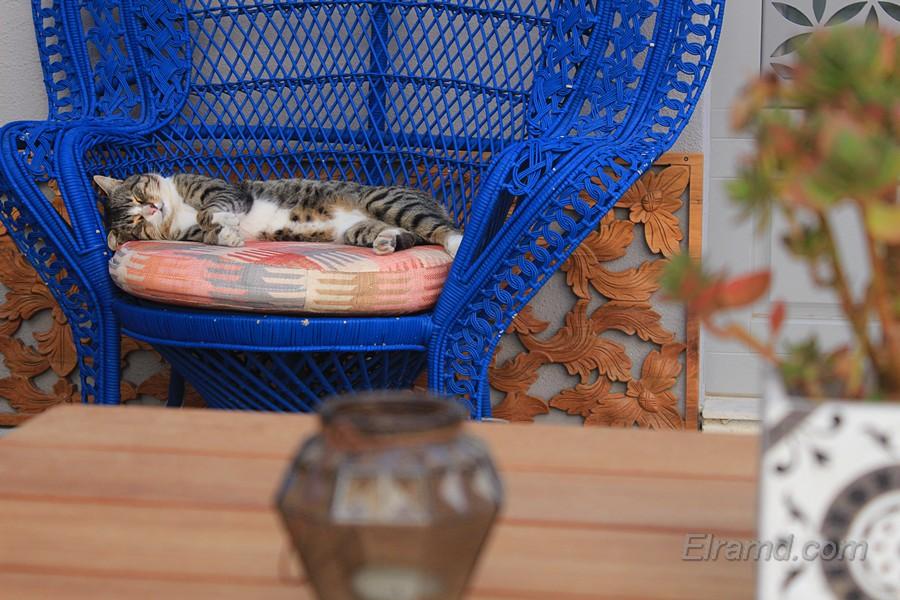 Кошачья жизнь в Ханье