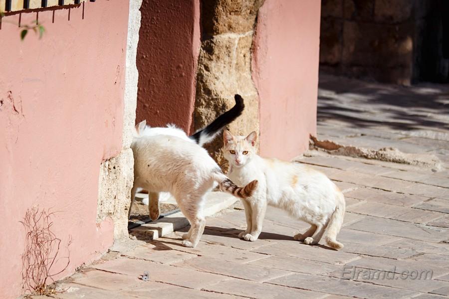 Кошки - хозяева города
