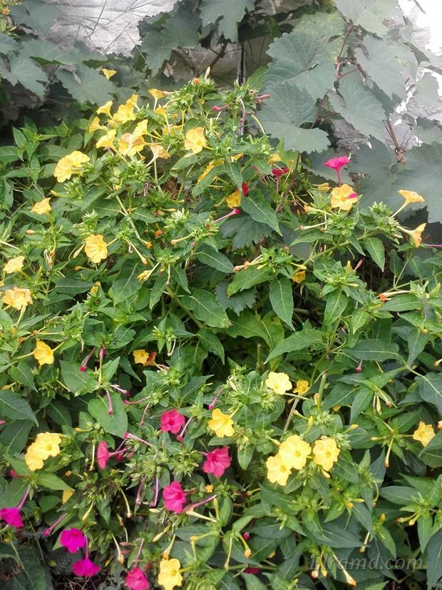 Пахучие цветы
