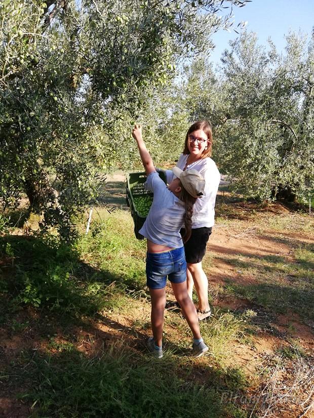 Майя учится собирать оливки