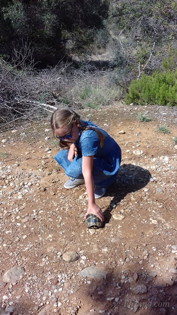 Майя нашла черепаху