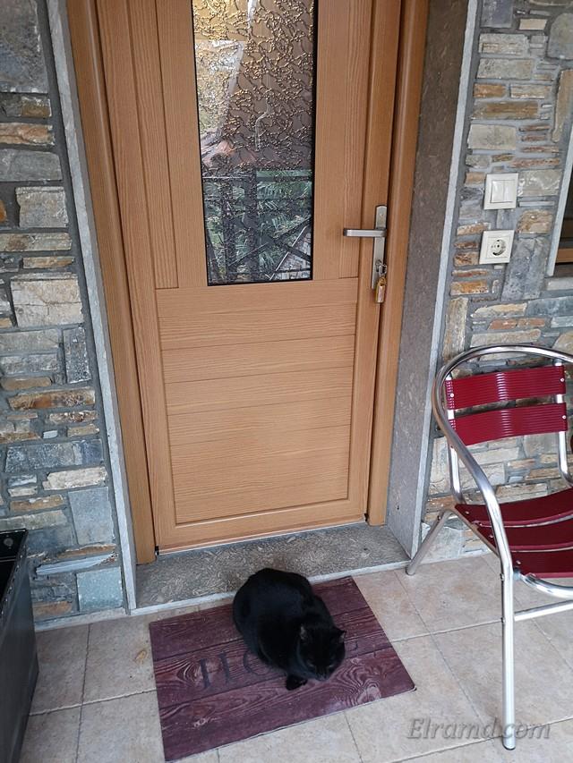 Кошки караулят у входной двери